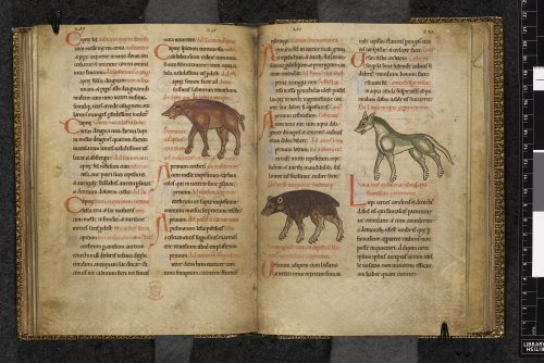 Boar and animals