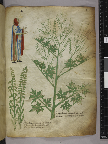 Plants and figure