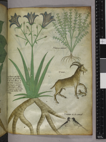 Plants, birds, and goats