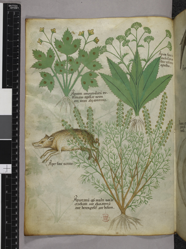 Plants and a boar