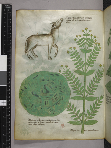 Plants and a donkey