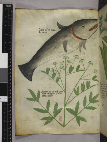 Plant and a fish