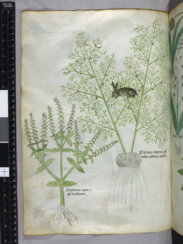 Plants and hare