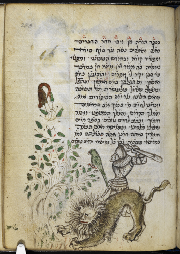 Man and lion fighting