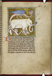 Elephant and dragon