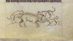 Hounds and boar