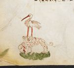 Dog and stork
