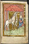 Cuthbert's horse finds him food