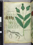 Plants and panther