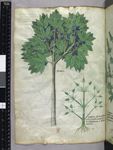 Plant and tree