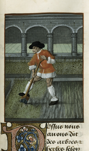 Man digging in a pleasure garden