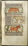 Pig, ox, and bull