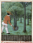 Man labouring in an orchard