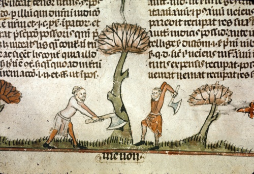 Two men chopping down a tree