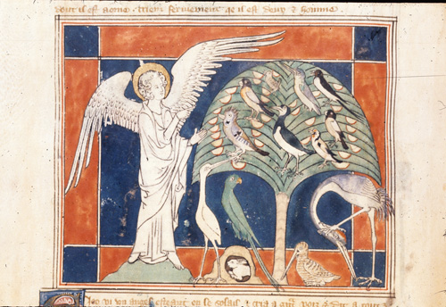 Angel, birds and a rabbit