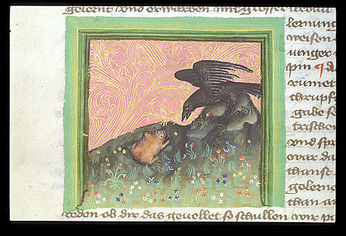 Raven and frog