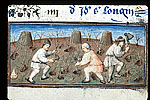Men working in a vineyard