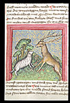 Sheep and stag