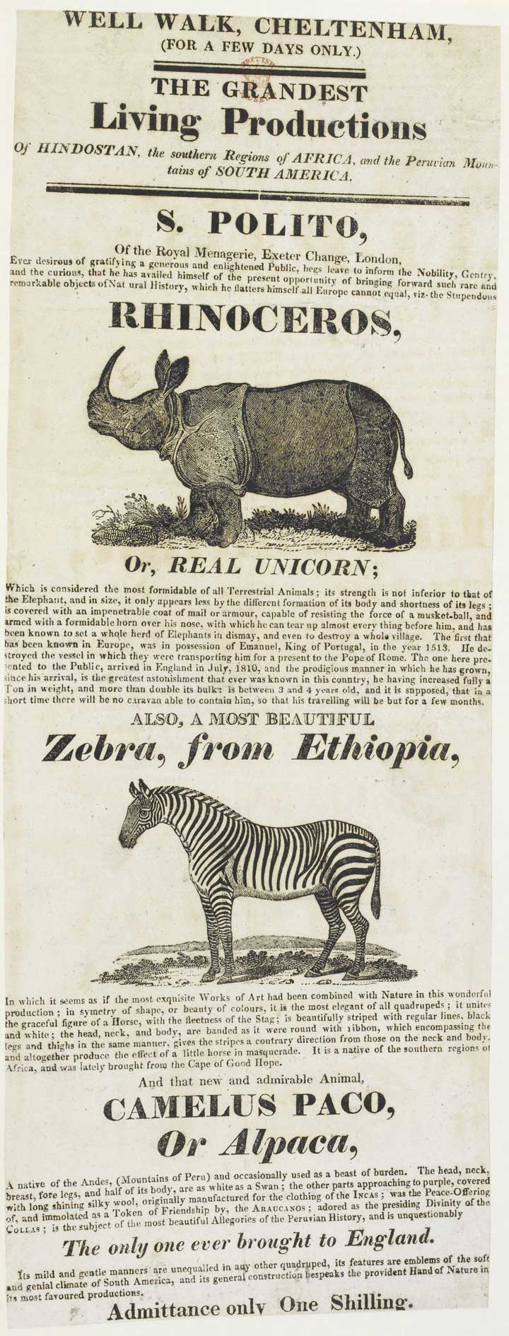 Poster advertising exhibition of a zebra and rhino, date unknown