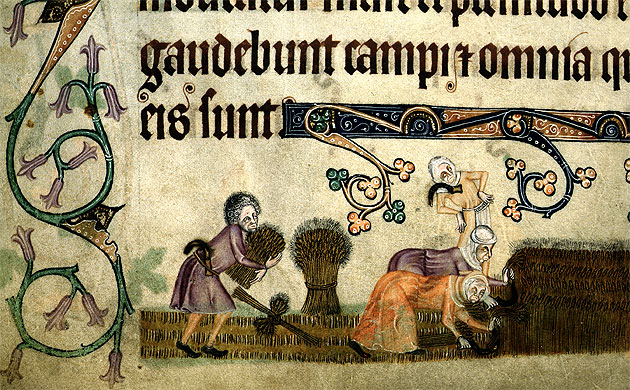 Image of medieval workers reap and bind sheaves