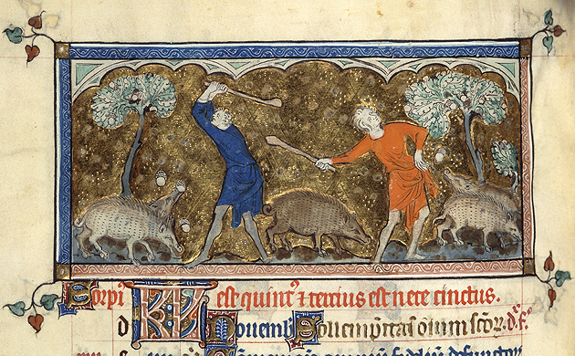 Harvesting acorn to feed swine, Royal 2 B VII f.81v, 1310-1320