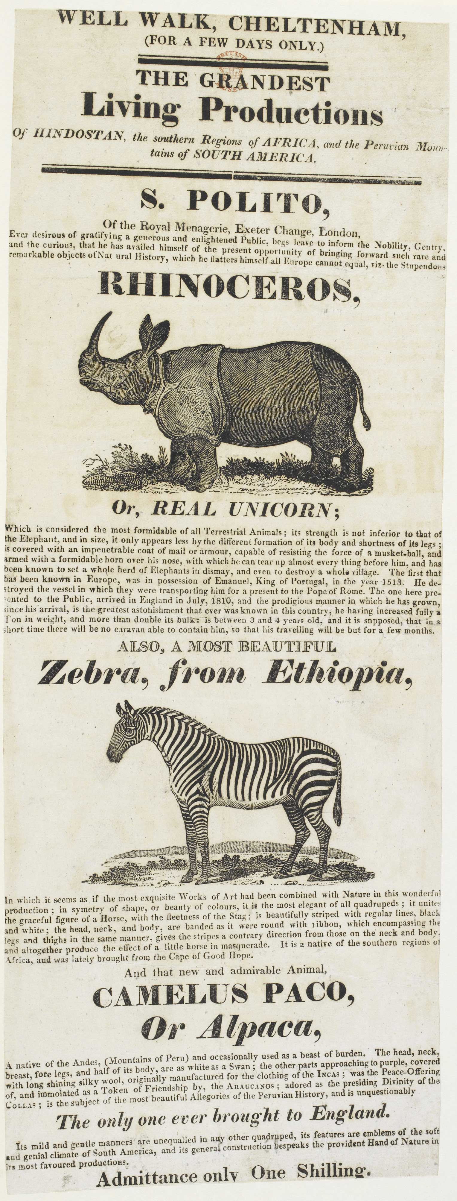 Exhibition of a rhino and zebra
