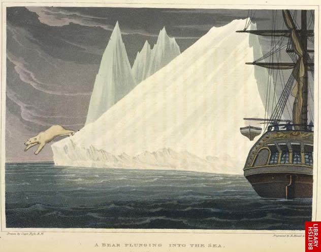 Image of polar bear jumping from an iceberg, drawn by Ross