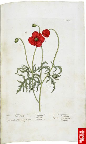 Blackwell's Herbal, page 4 - Red Poppy
