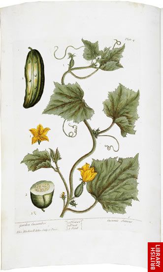 Blackwell's Herbal, page 5 - Garden Cucumber