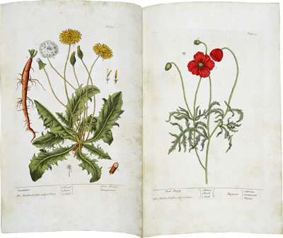 Virtual books: images only - Blackwell's Herbal: Dandelion and Red Poppy, Plates 1 and 2