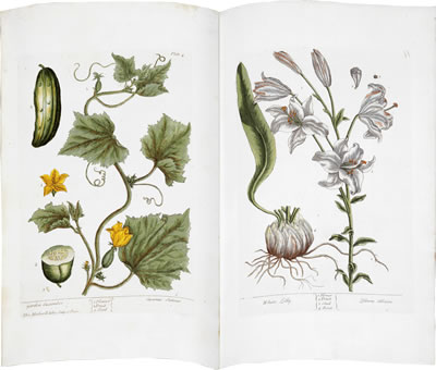 Virtual books: images only - Garden Cucumber and White Lily, Plates 4 and 11