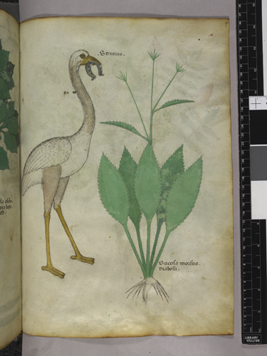 Plant and bird