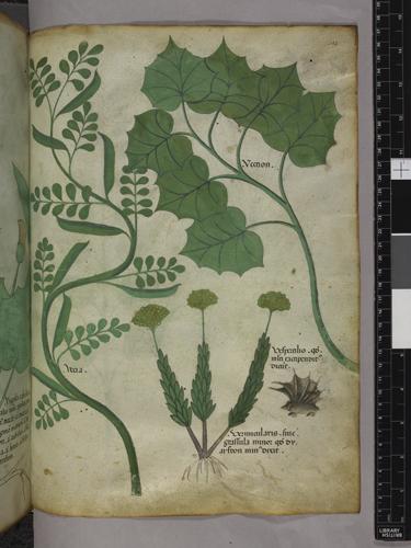 Plants and an animal