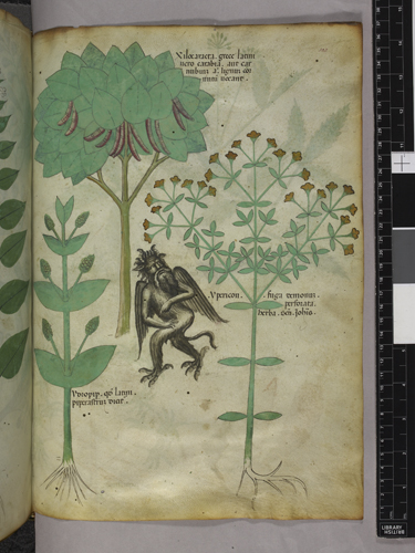 Plants and demon