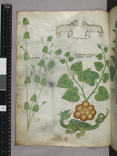 Plants, sheep, and dragon