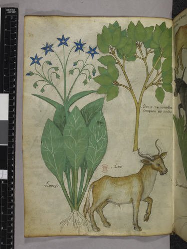 Plants and a bull
