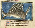 Detail: Swordfish