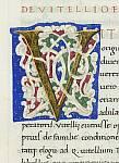 White-vine initial