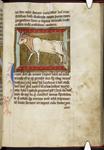 Bull (bullock)