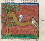 Snake and bird