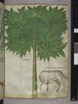 Tree and beaver