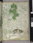 Plant and boar
