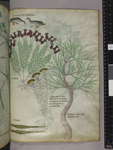 Plants, birds, and insects