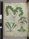 Plants, bird of prey, and duck
