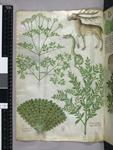 Plants, snake and der