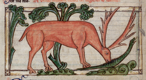 Stag with a serpent