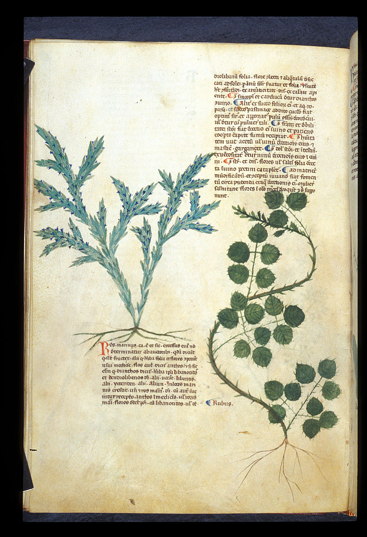 Rosemary and Blackberry