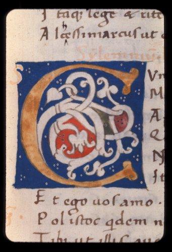 White vine initial