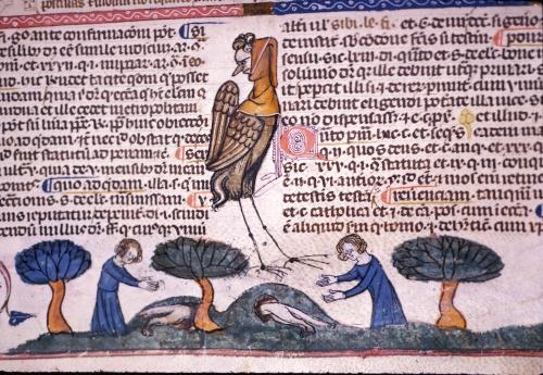 Men catching rabbits
