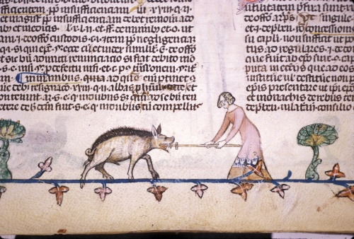 Woman repelling a boar